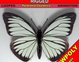 3D asset Butterfly - PareroniaCeylanica