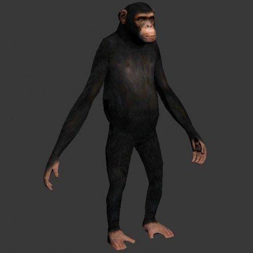 monkey model 3d model obj mtl 1