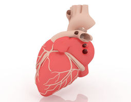 3D model Human Heart cardiovascular