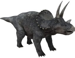 3D model game-ready triceratops