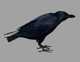 Crow raven 3D model