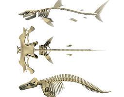 Sharks Skeletons 3D Models anatomy