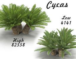 Cycas 1 3D asset