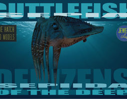 3D asset Cuttlefish
