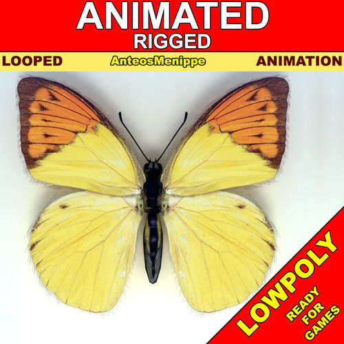 Butterfly - Anteos Menippe