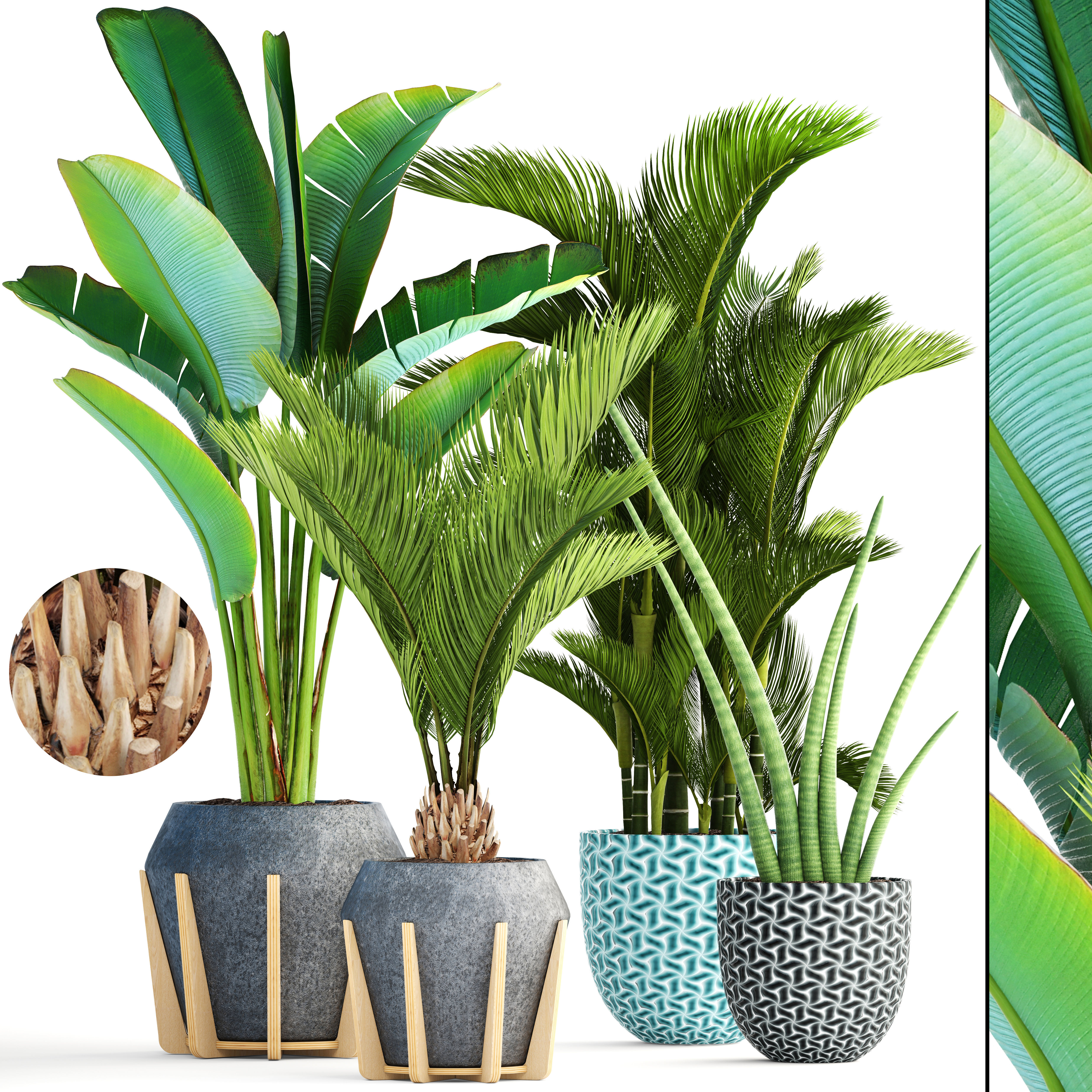 Collection Of Tropical Plants Botanical 3d Model