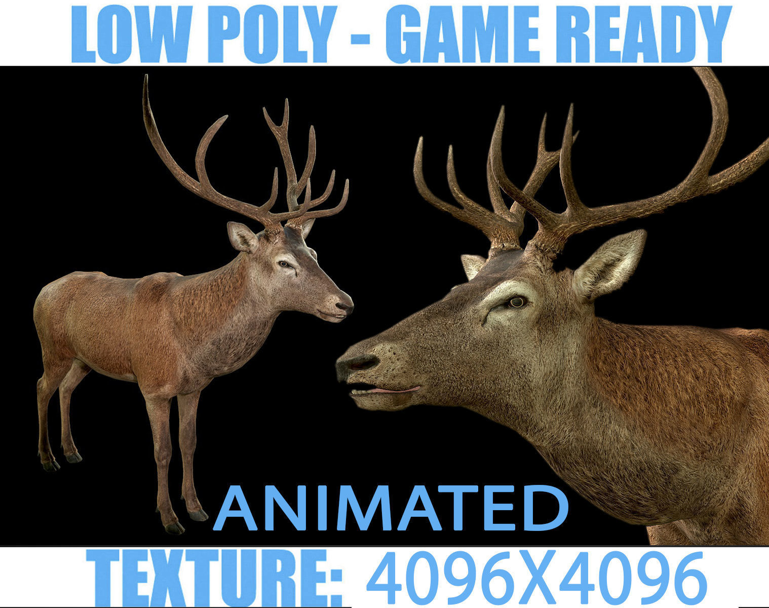 Deer animated