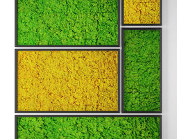 stabilized moss 3D