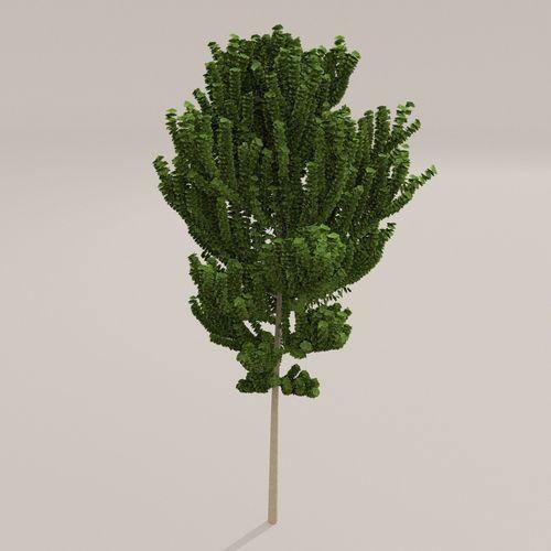 Birch Tree3D model