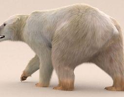 3D Polar Bear Fur Rigged