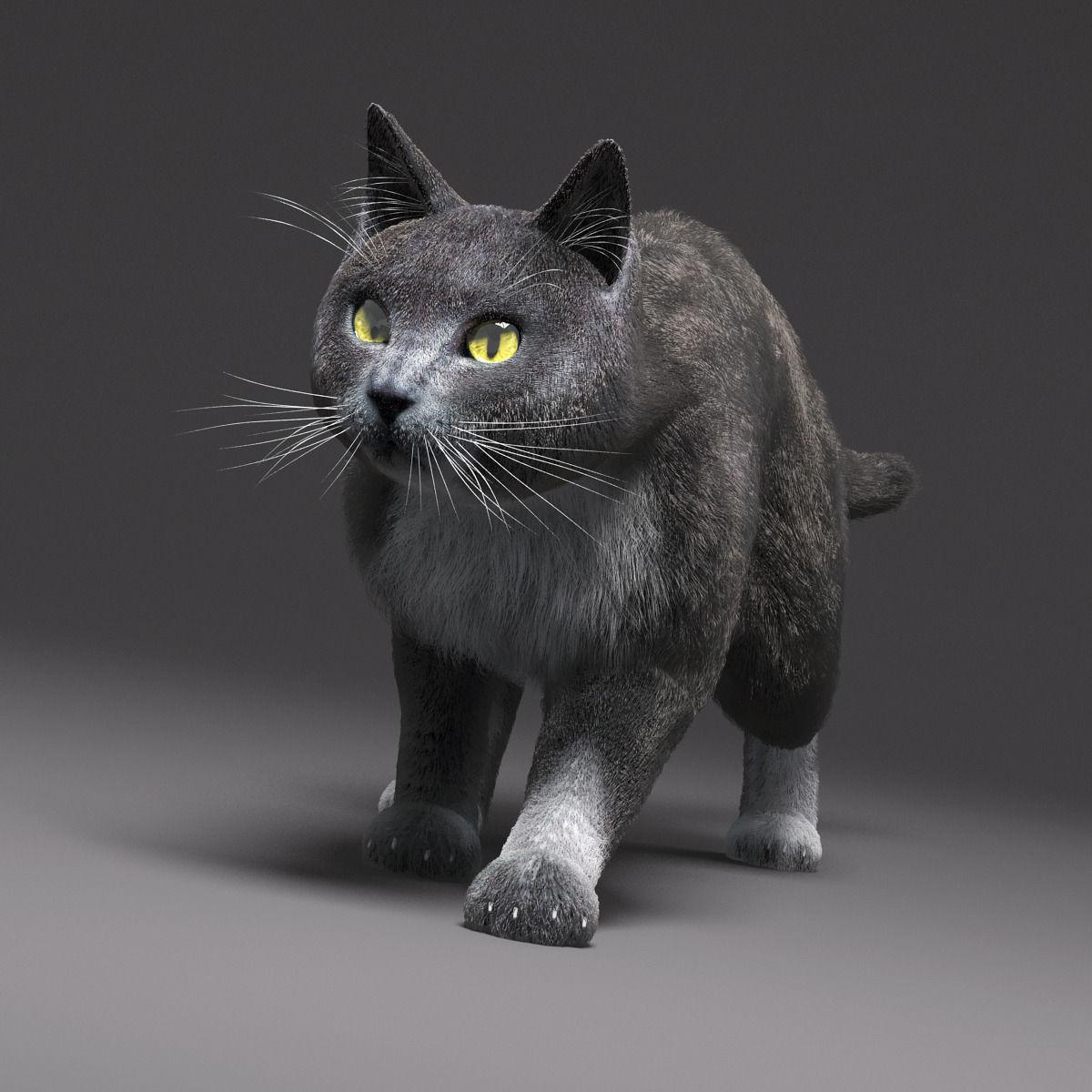 Domestic Cat Gray Fur 3d Model Rigged Max Cgtrader Com
