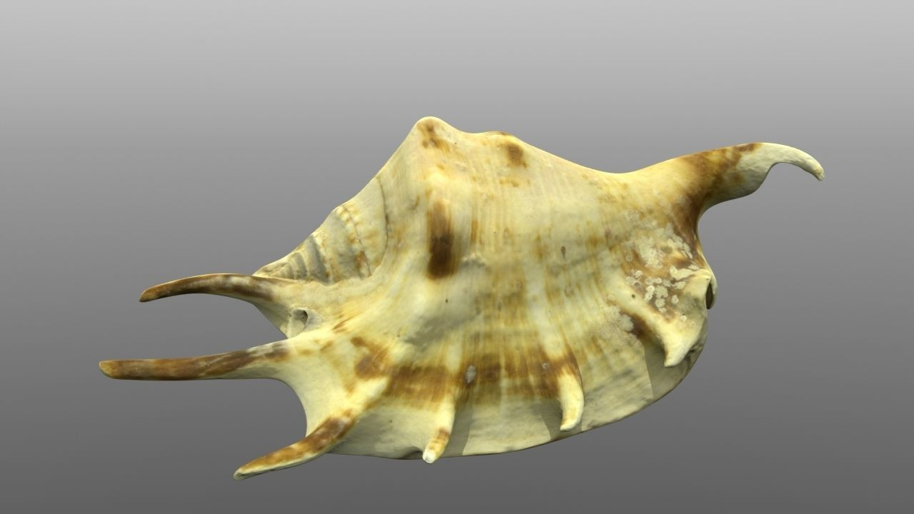 Sea shell low poly 3d model