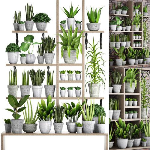 collection of plants in concrete pots 2 3d model max obj mtl fbx unitypackage prefab 1