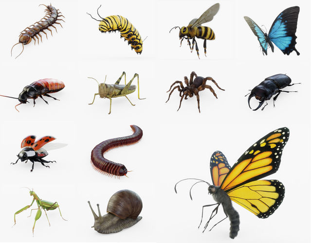 insect collection rigged full 3d model obj mtl 3ds fbx stl blend dae 1
