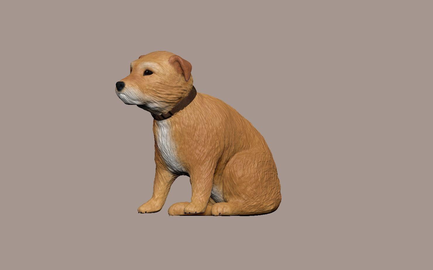 small Irish terrier