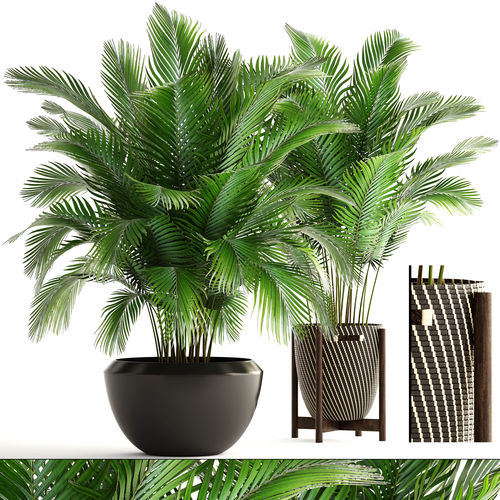 collection of plants areca palm 3d model cgtrader