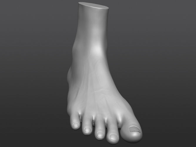 Human 3D foot model