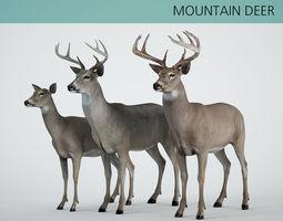 mountain deer 3D model