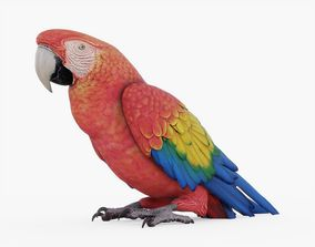 Red Macaw Parrot 3D asset