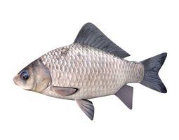 Crucian Carp Carassius Carassius Fish 3D model