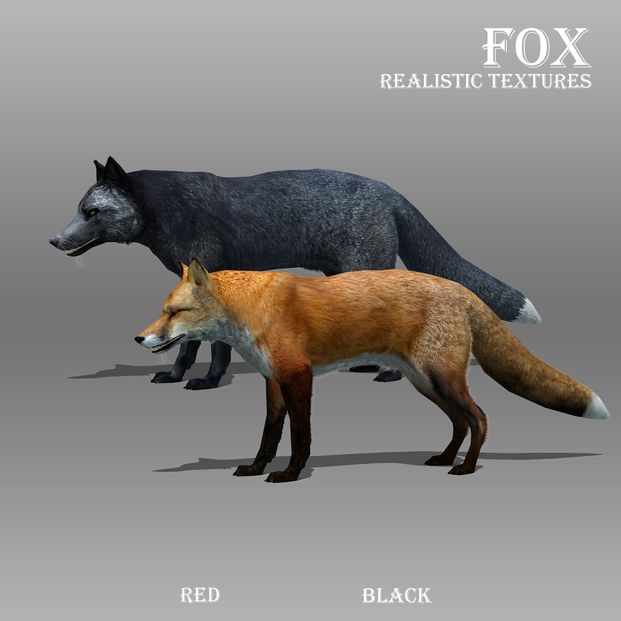 Red and Black Fox