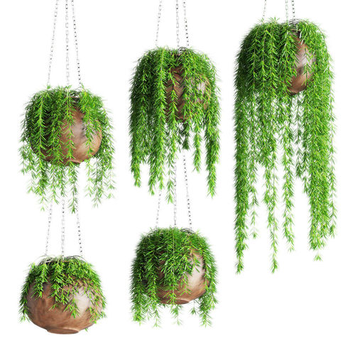 Hanging Plants In Pots 3d Model Cgtrader