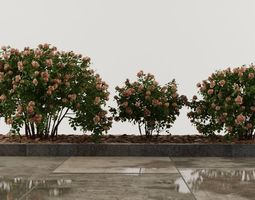 Rose set and boxwood 3D model
