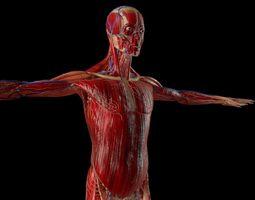 3D model Human Body Anatomy