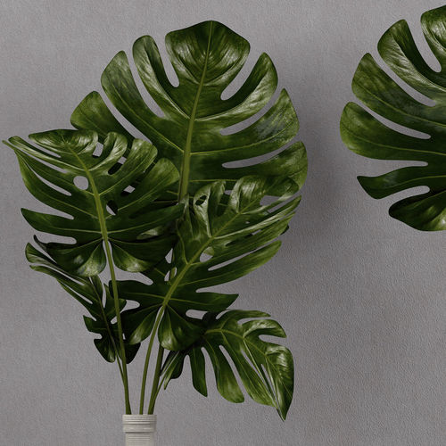 Monstera Plant In Vase 3d Model Cgtrader