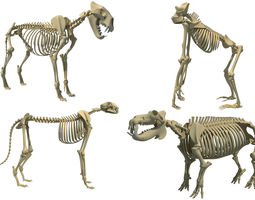 Animal Skeleton 3D Models