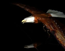 Eagle Full Rigged 3D model game-ready