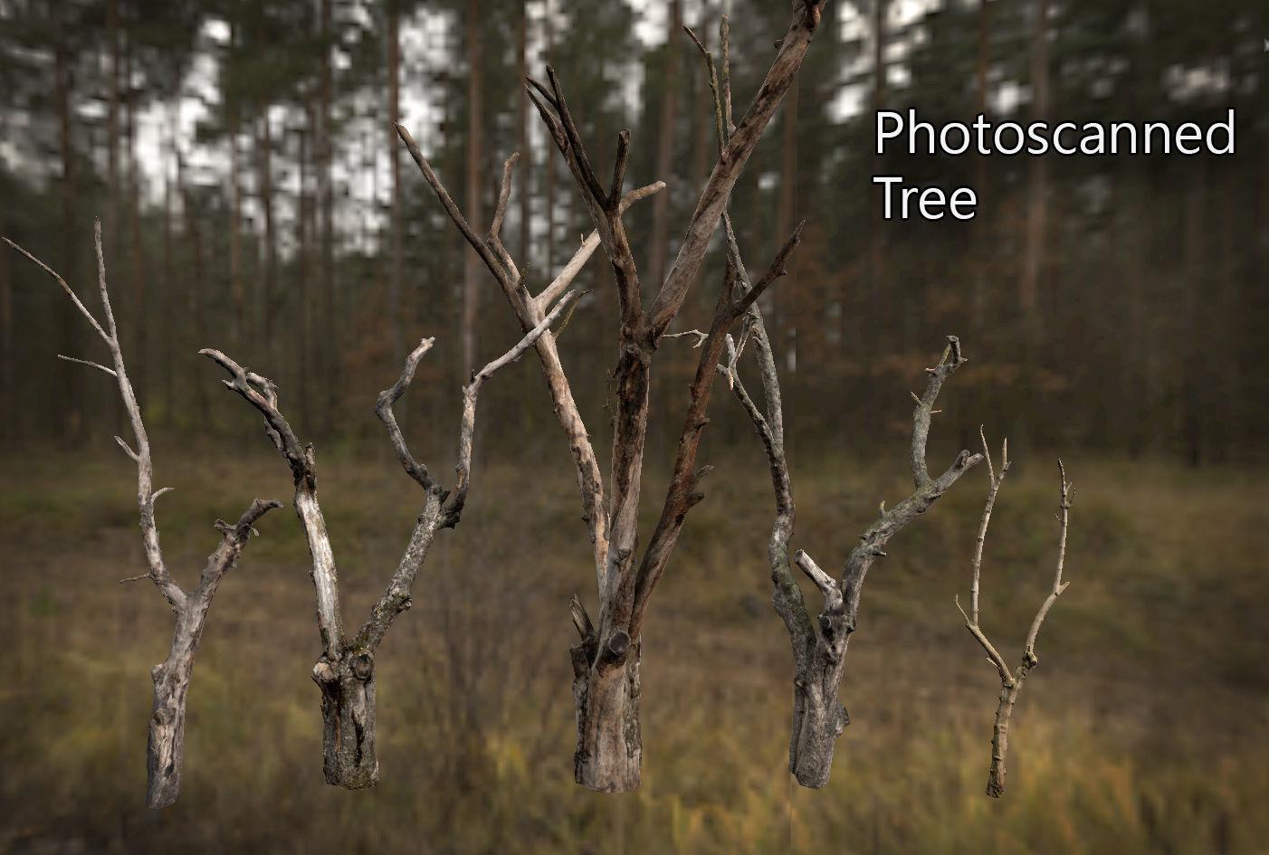 Photorealistic Photoscanned Tree | 3D model