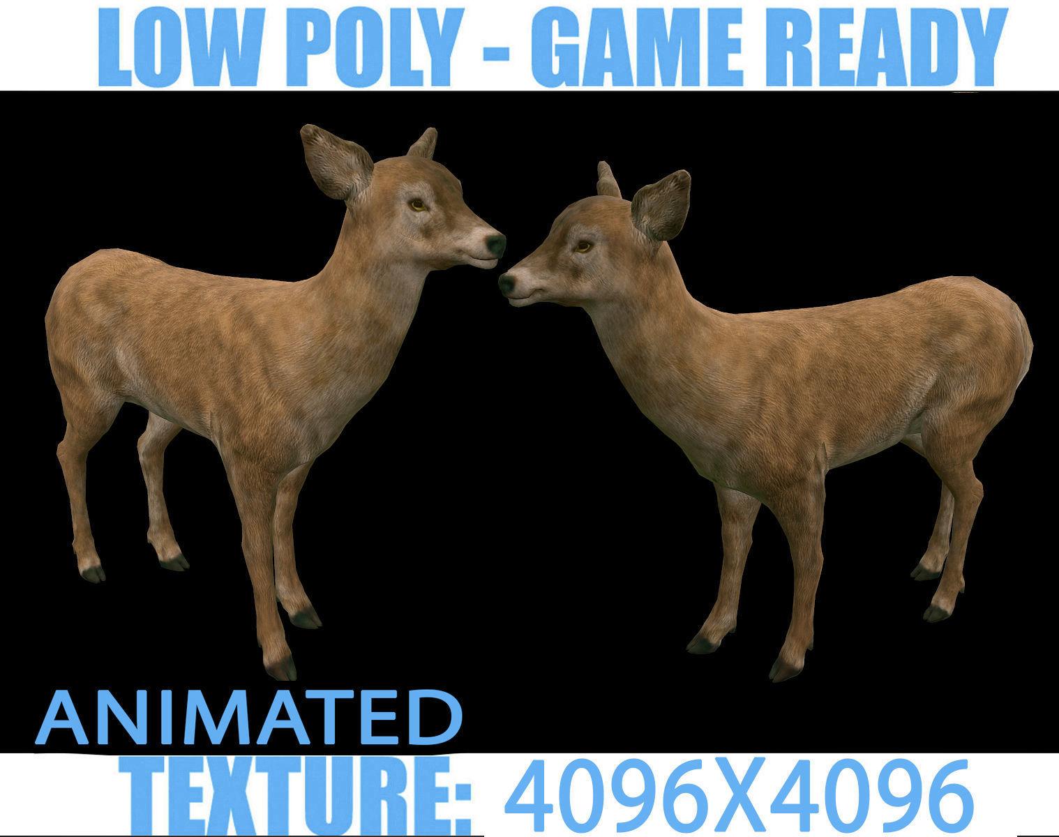 Deer Doe Animated