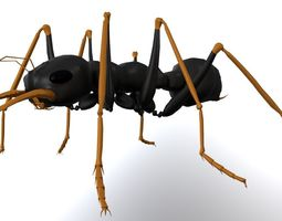 Ant Jack Jumper 3D model