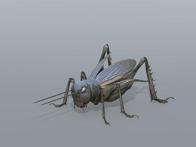 gryllulus   cricket 3d model low-poly max obj mtl fbx tga 1
