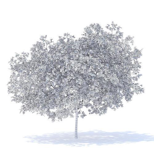 Peach Tree 3D Model   3D model
