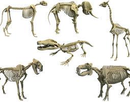 3D model Savanna Animal Skeletons