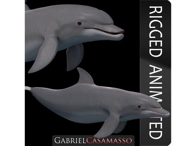 bottlenose dolphin tursiops truncatus 3d model max obj mtl c4d 1