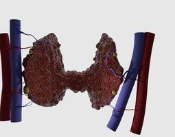 3D print model Thyroid