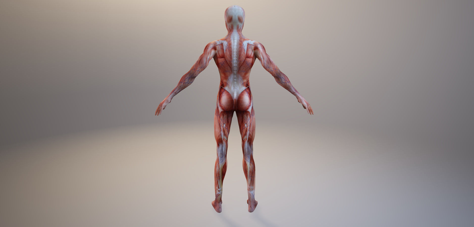 Anatomy Man - 3D Horror Asset VR / AR ready | CGTrader