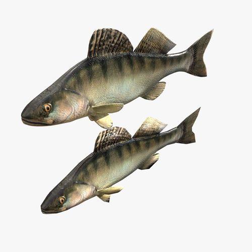 Fish Bersh