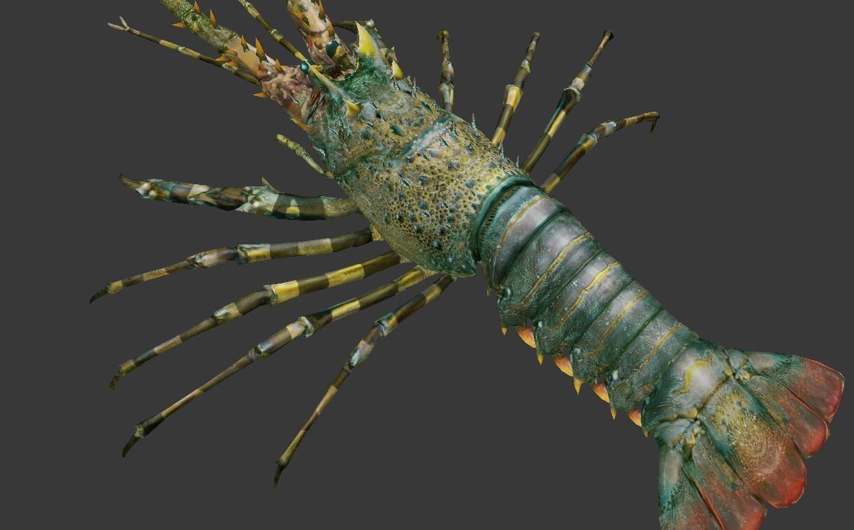 lobster    Australian lobster
