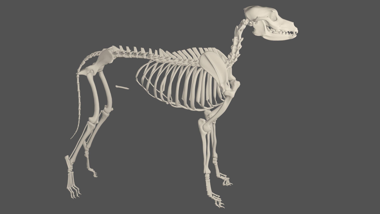 D Dog House 3D dog skeleton model ...