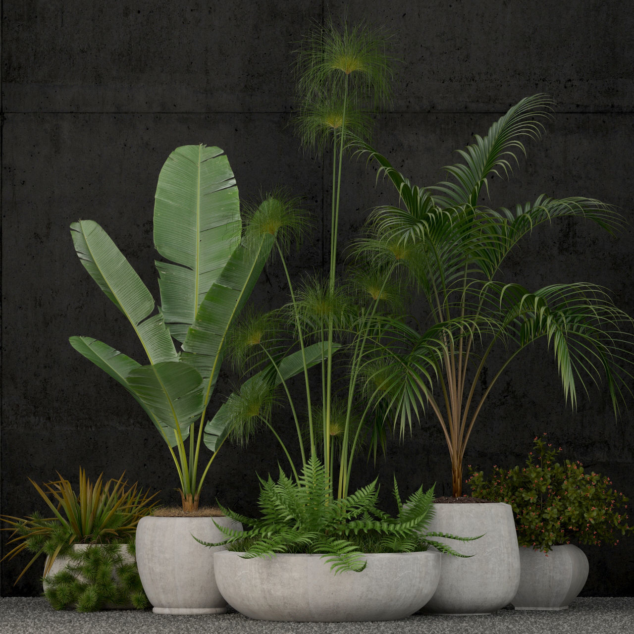 Plants collection 80