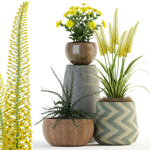 Plants collection 81