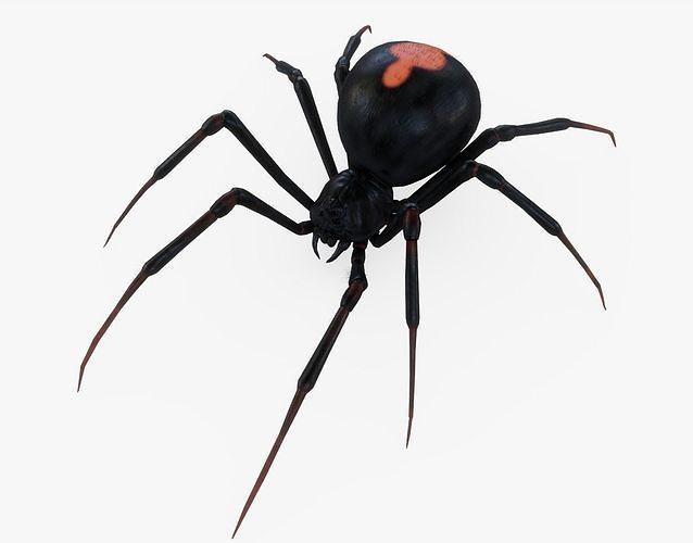 black widow spider rigged 3d model obj mtl 3ds fbx stl blend dae 1