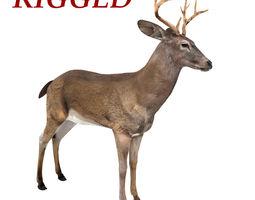 Deer Rigged 3D asset game-ready