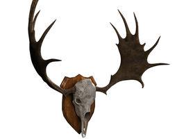 3D model Moose Skull