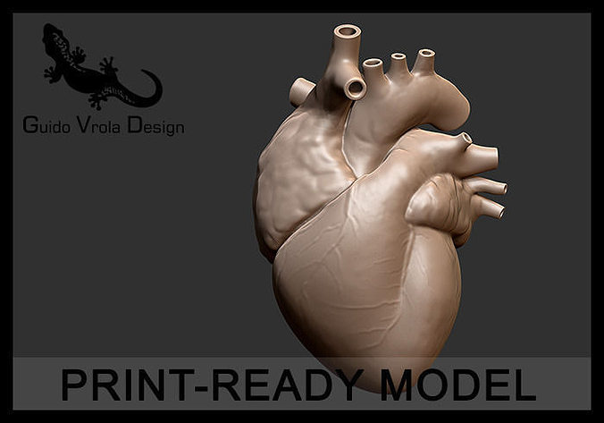 printable accurate human heart 3d model obj stl 1