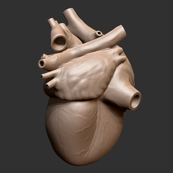 Printable Accurate Human Heart 3D Model 3D Printable OBJ